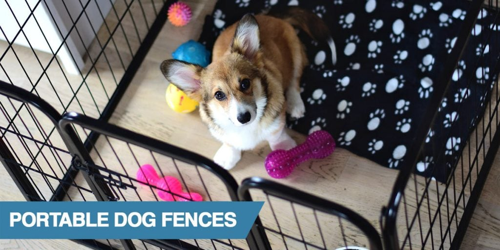 A guide to the best portable dog fences
