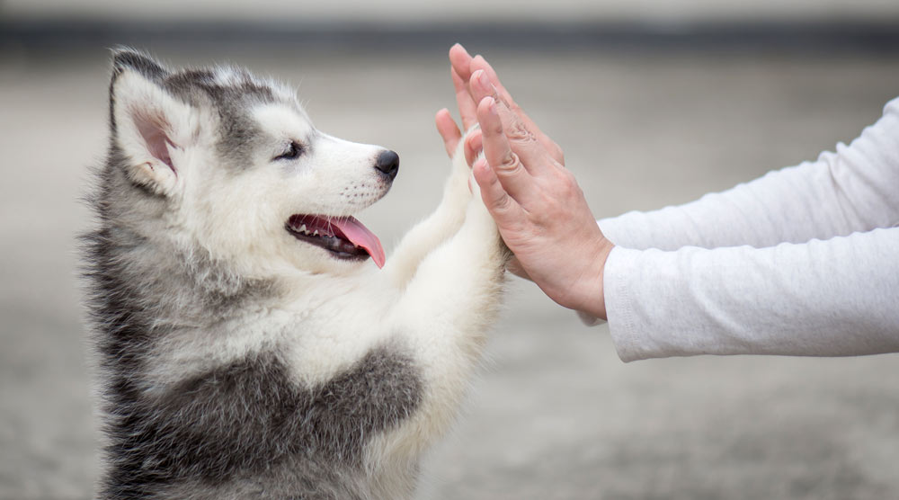Happy puppy touching human hands