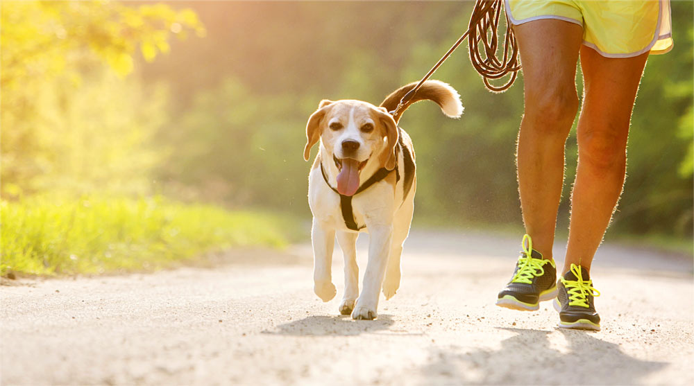 Our guide to the best dog running harnesses