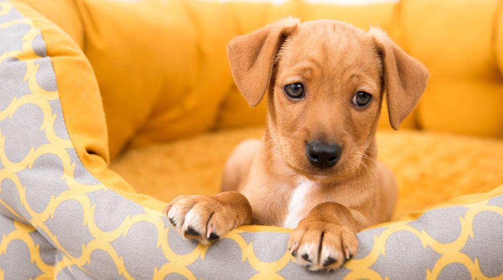 Close up of a cute little puppy
