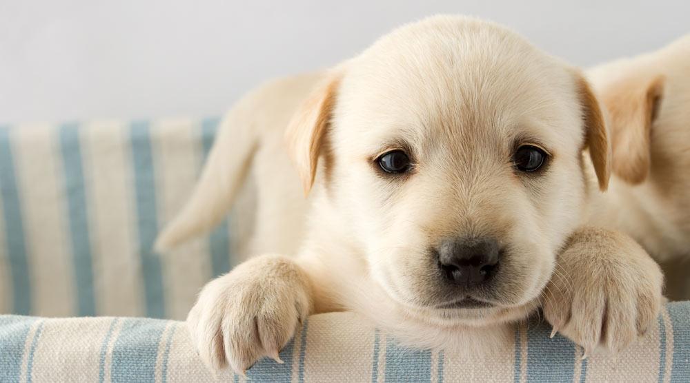 Close up of a cute puppy