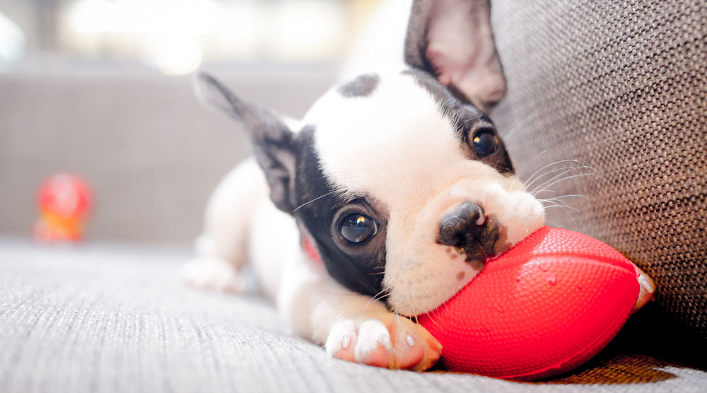 cute puppy playing on the sofa