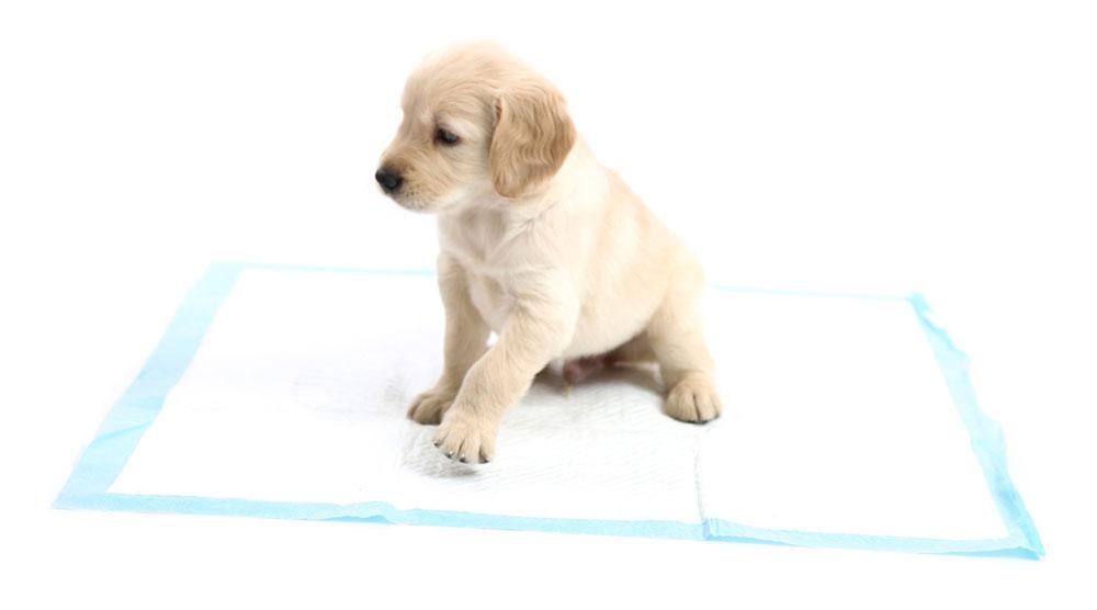Puppy pad