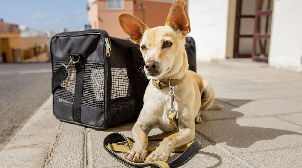 A dog in a black carrier