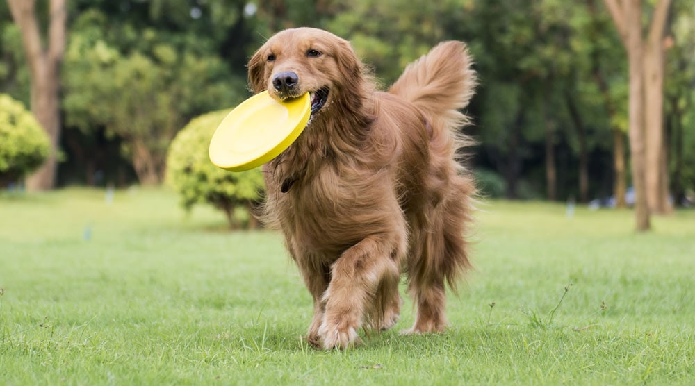 Happy dog with yellow frisbee