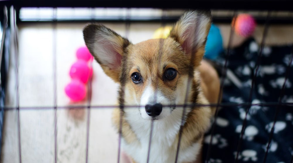 A guide to the best dog crates