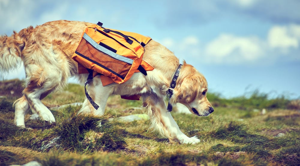 """alt=""""Our guide to the best dog backpacks"""""""