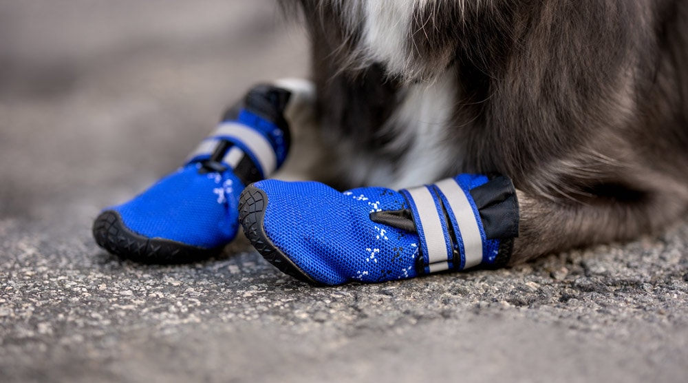 Best Dog Boots For Hiking And Winter