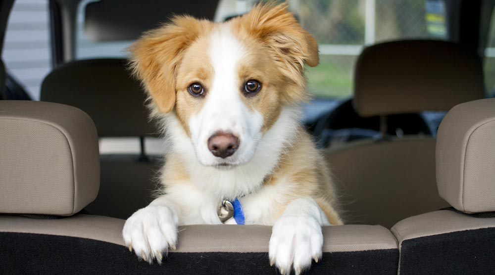 Our complete guide to choosing a dog car seat