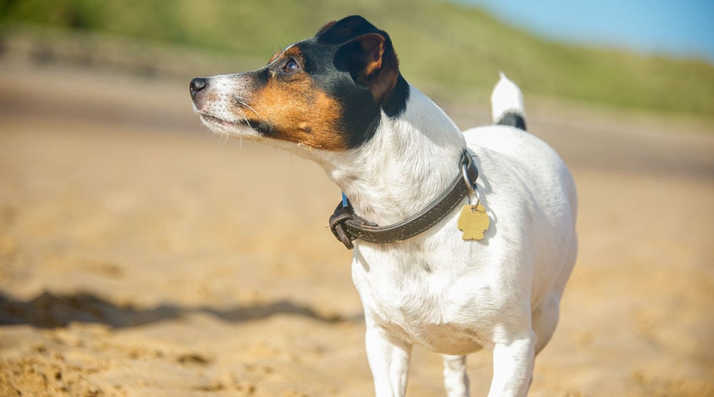Here are 8 of the best dog collars for dogs