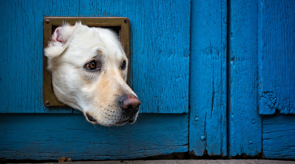 Our guide to the best dog doors