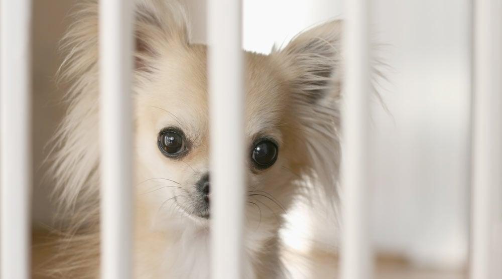 Best Dog Gates Indoor Outdoor Stair, Best Outdoor Pet Gates
