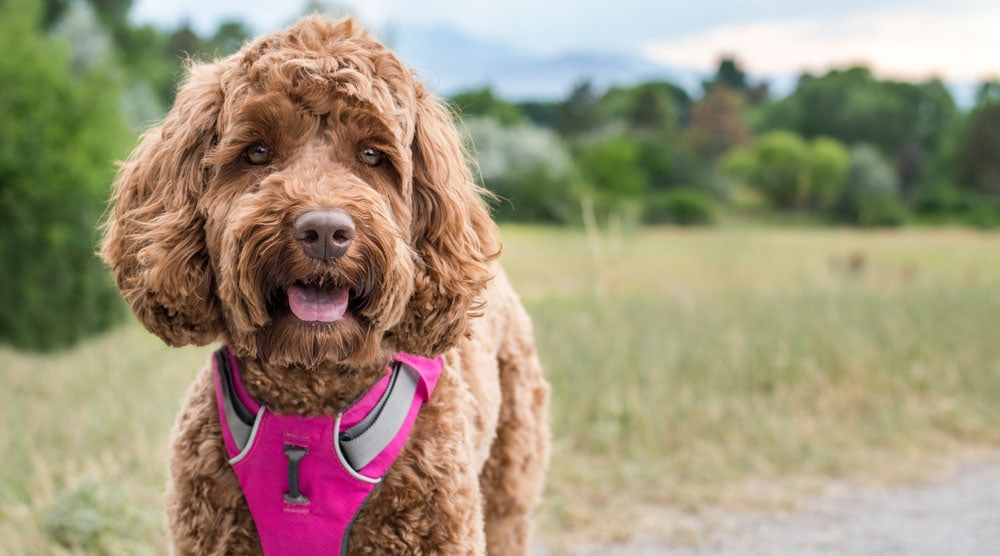 Our guide to the best harnesses