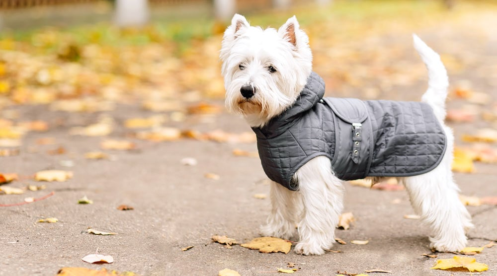 Our guide to the best dog raincoats