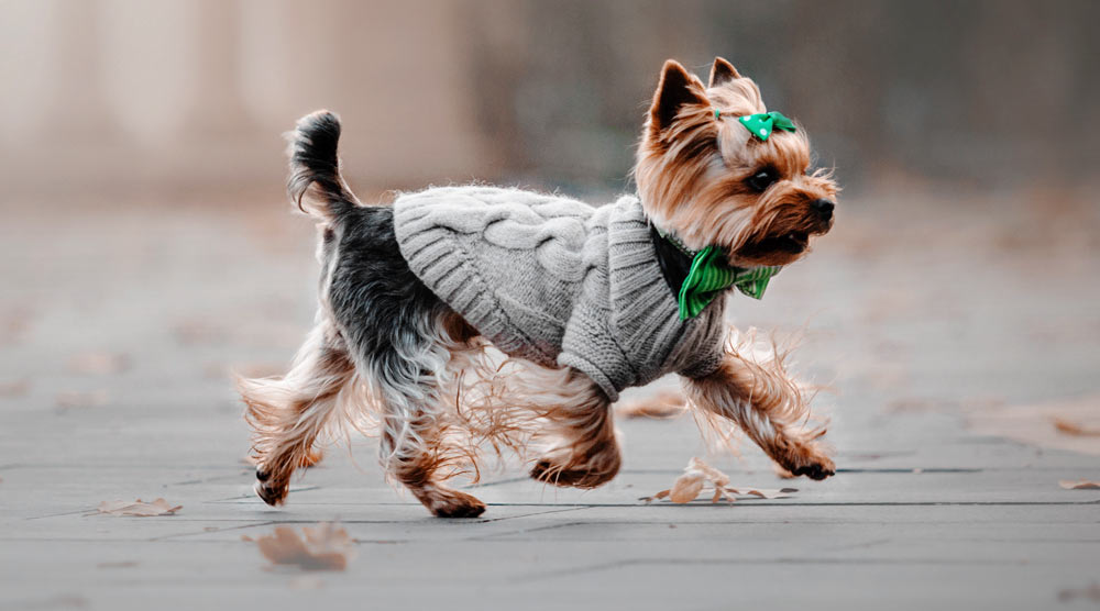 A guide to the best sweaters for dogs