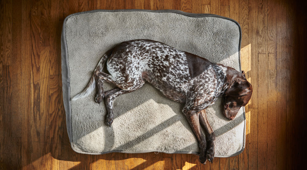 We've compiled a list of the best orthopedic dog beds
