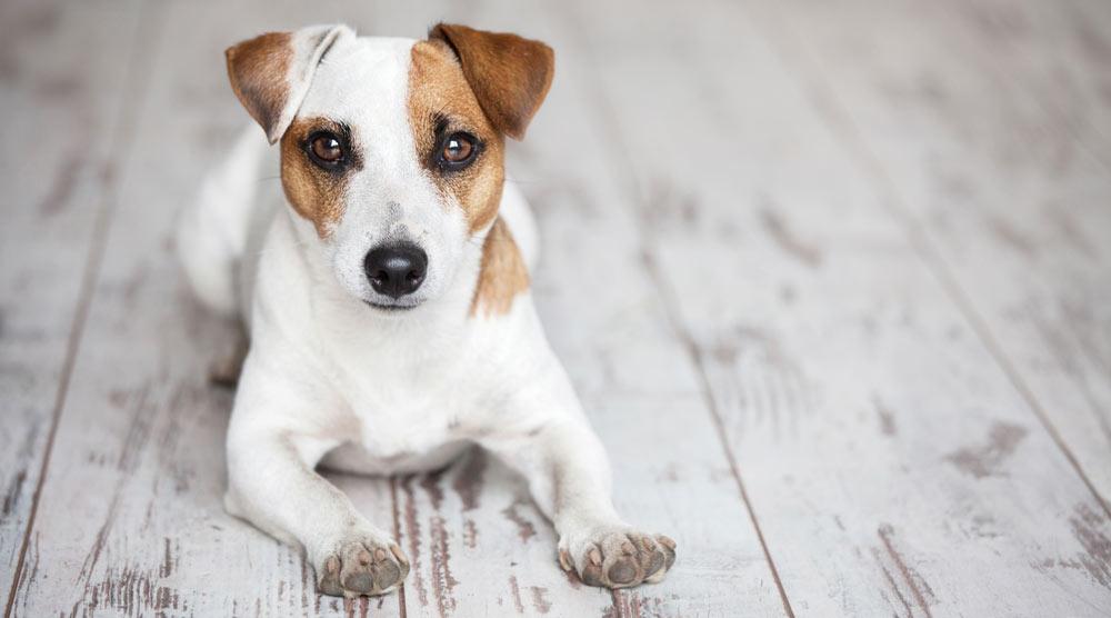 Cute dog sitting on the floor