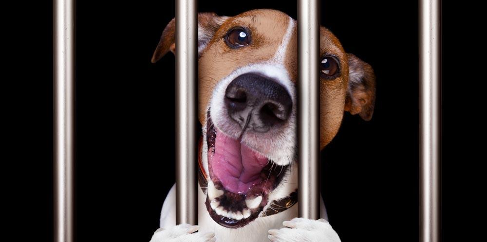 A dog behind bars
