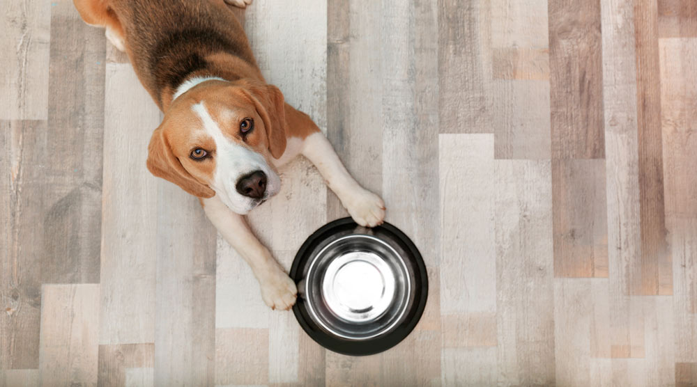 A guide to the best auto dog feeders