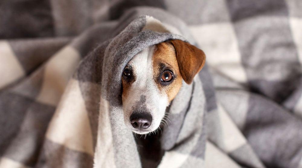 Dog under heating pad