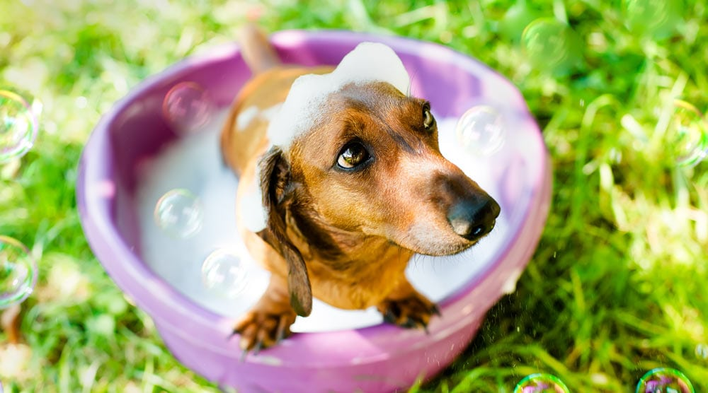 Cute dog in a pink outdoor bath