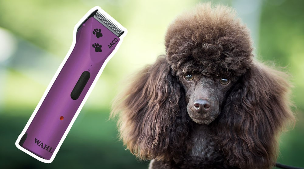 A guide to poodle clippers