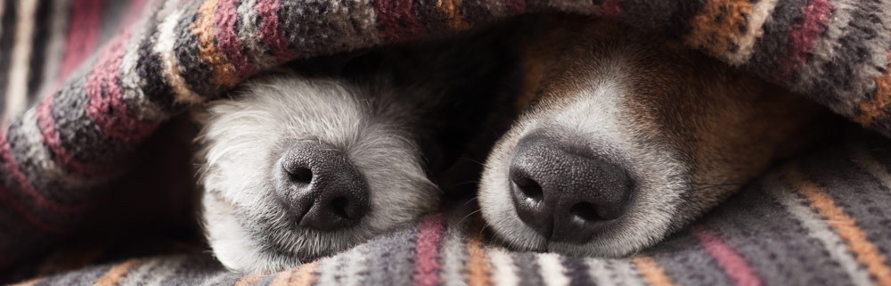 Two dogs in a cave bed