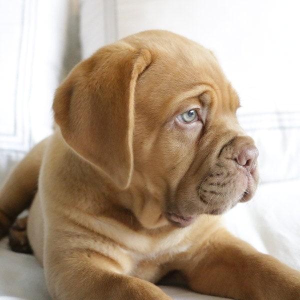 A cute pup