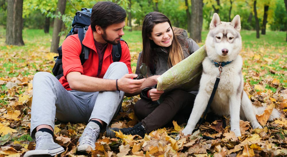 Couple with a dog out camping