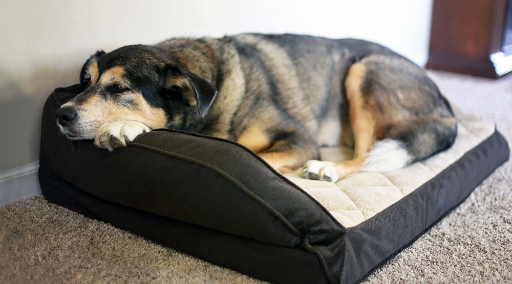 A guide to corner dog beds