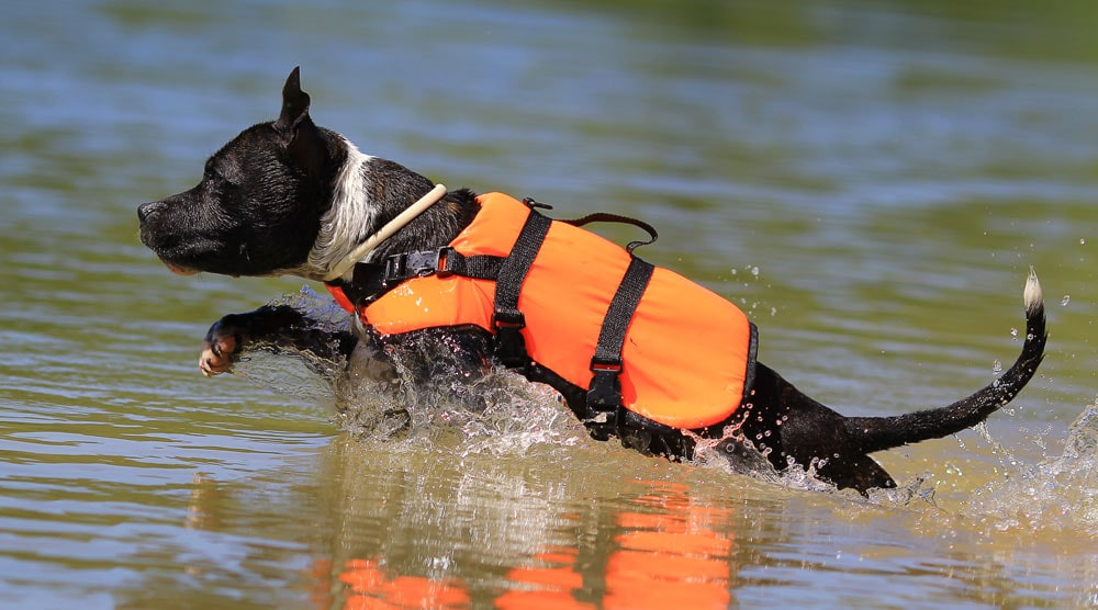 A guide to the best dog life jackets