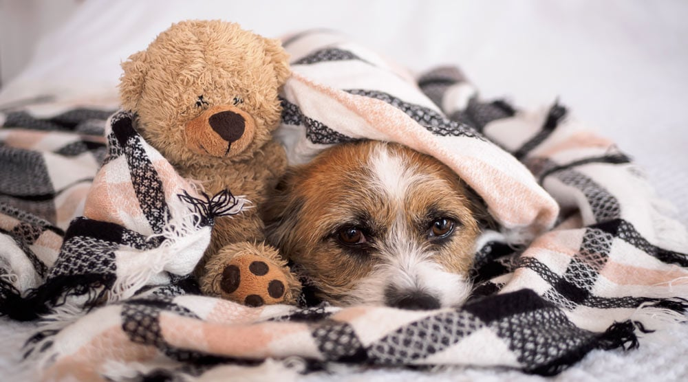 A guide to cute dog beds