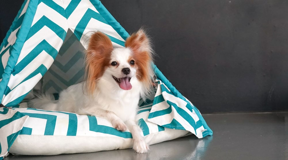 A guide to the best dog teepees