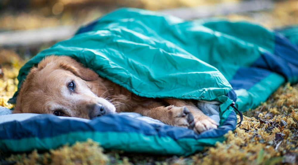A guide to the best sleeping bags for dogs