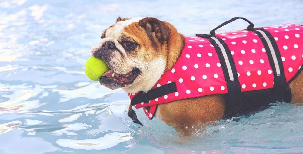 Dog in swimming pool