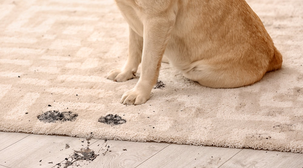 Paw cleaners can help with muddy paws