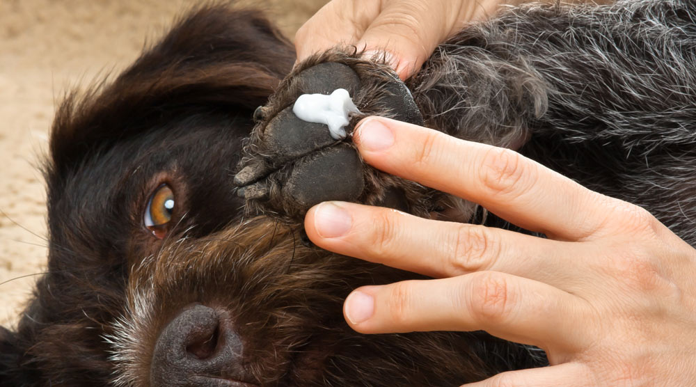 A guide to the best dog paw balms and waxes