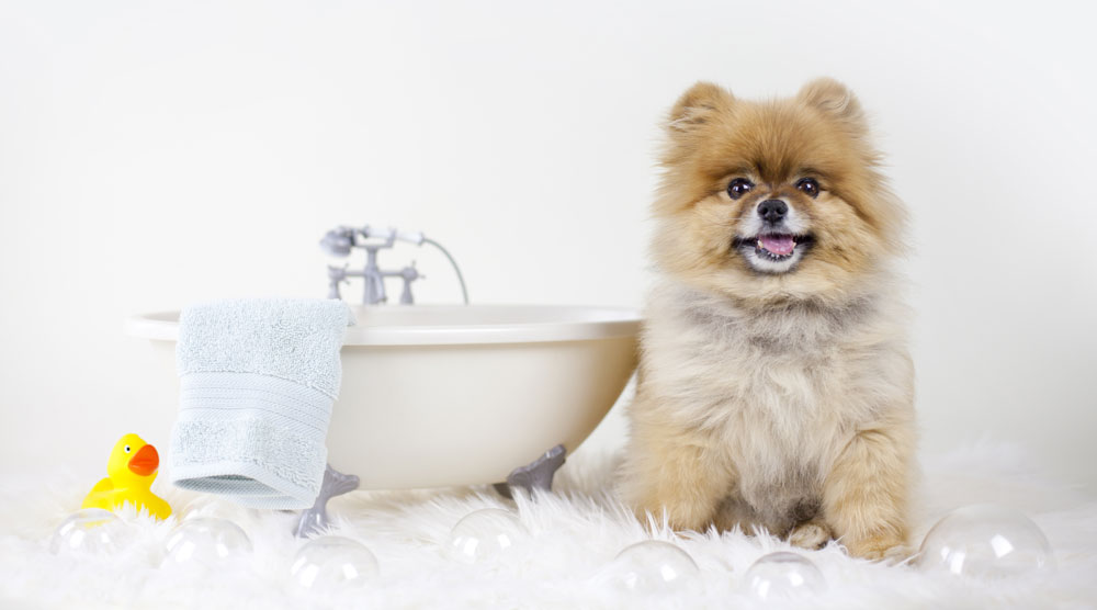A guide to the best dog conditioners