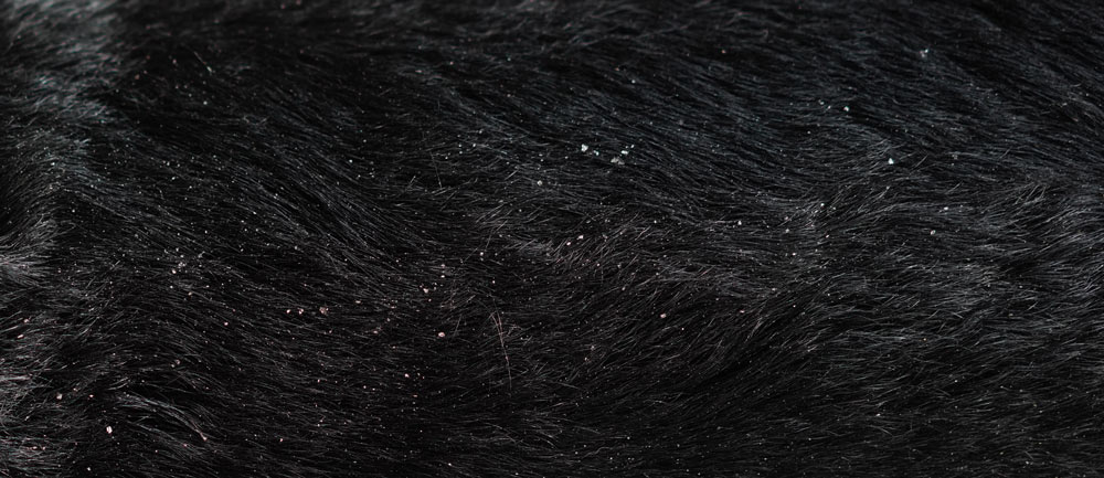 Example of dog dandruff