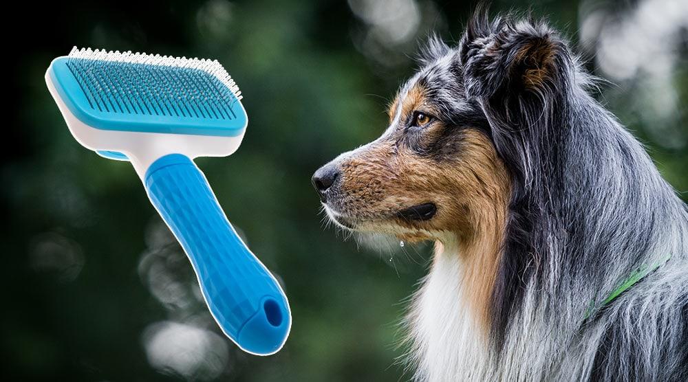 A guide to the best brush for Australian Shepherd dogs
