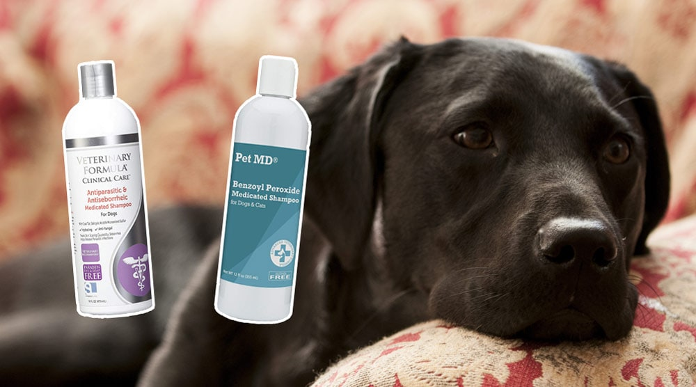 A guide to the best dandruff shampoo for dogs
