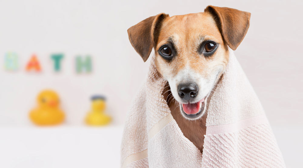 A guide to oatmeal shampoos for dogs