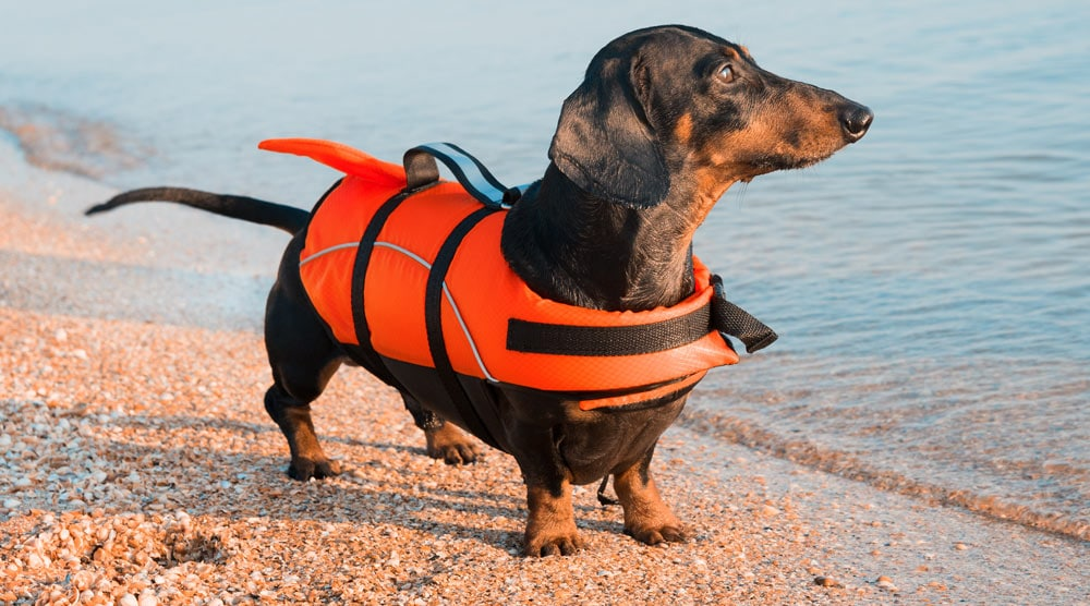 A guide to the best dachshund life jackets