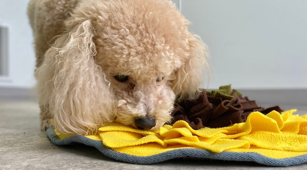 A guide to the best puzzle feeders for dogs