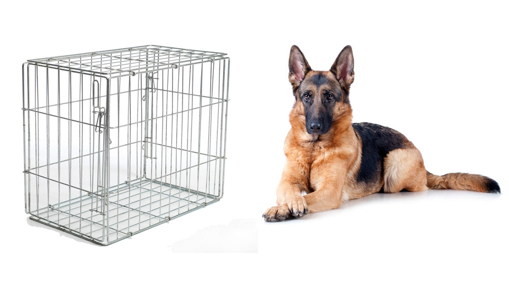 A guide to the best German Shepherd crates