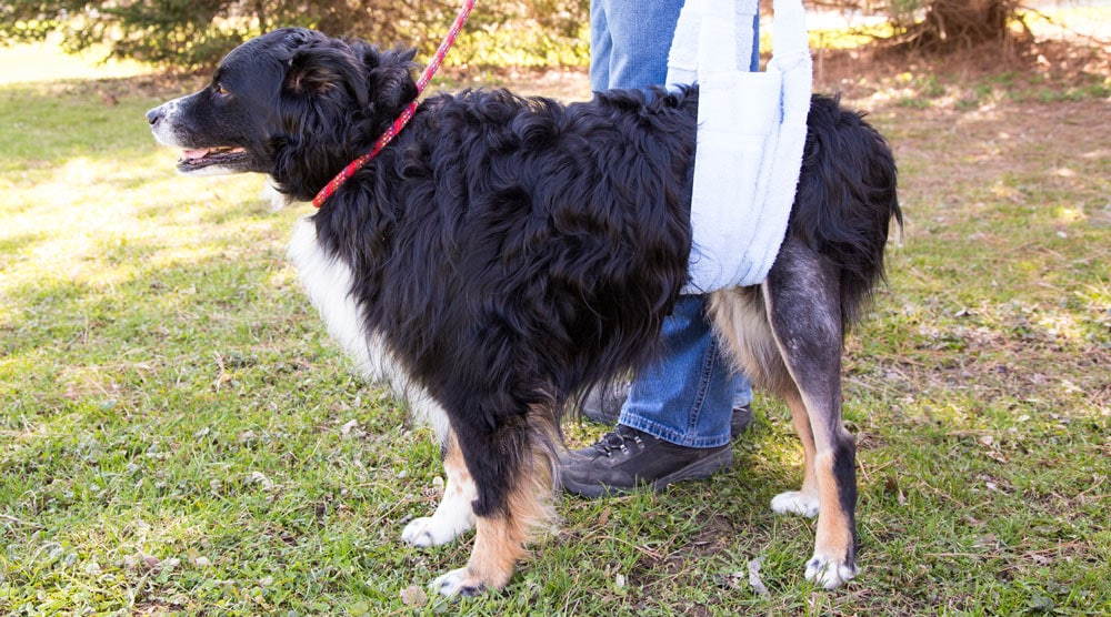 A guide to harnesses and slings for back legs