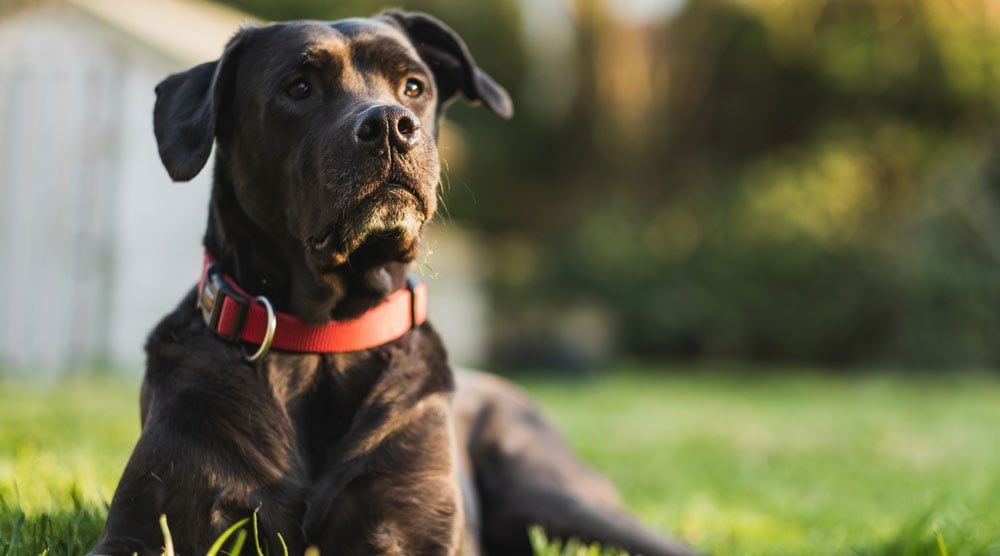 A guide to the best indestructible dog collars