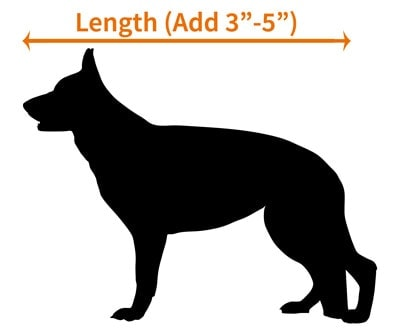 Measuring the length of a German Shepherd for a crate