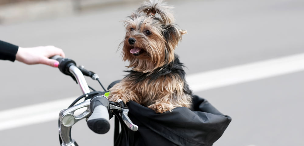 A dog in a bike carrier or bicycle seat