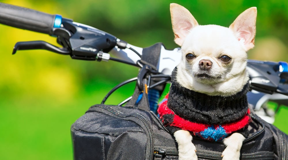 A guide to the best dog baskets and carrier for bikes